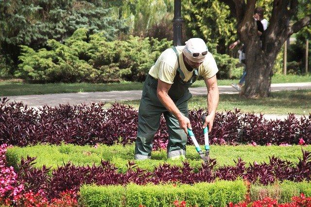 zahradník při práci